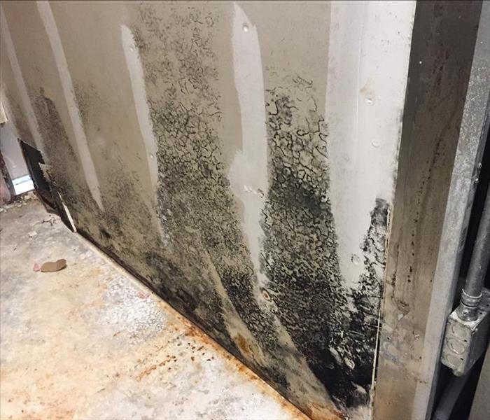 Biohazard Commercial Mold Remediation by SERVPRO in St. Augustine.