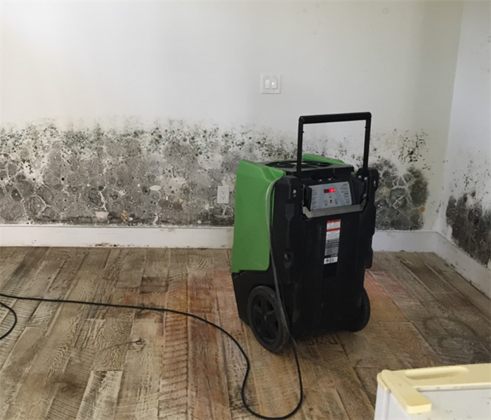 Mold Remediation Mold Damage in the Nation's Oldest City