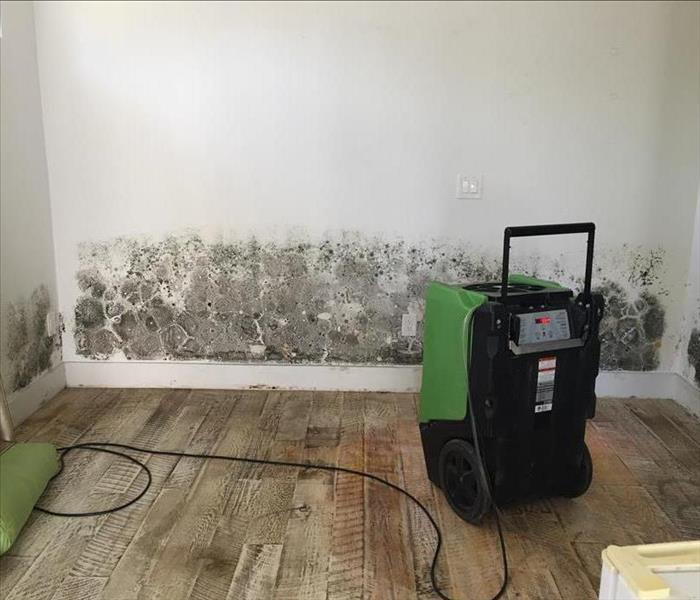 Mold Remediation Common signs you may need professional Mold Removal and Restoration