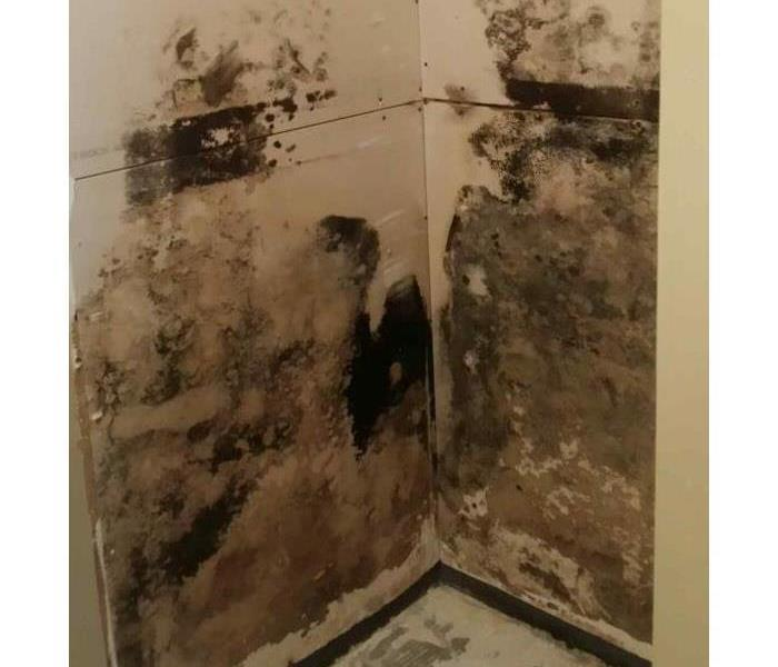 Mold Remediation What is a mold protocol?