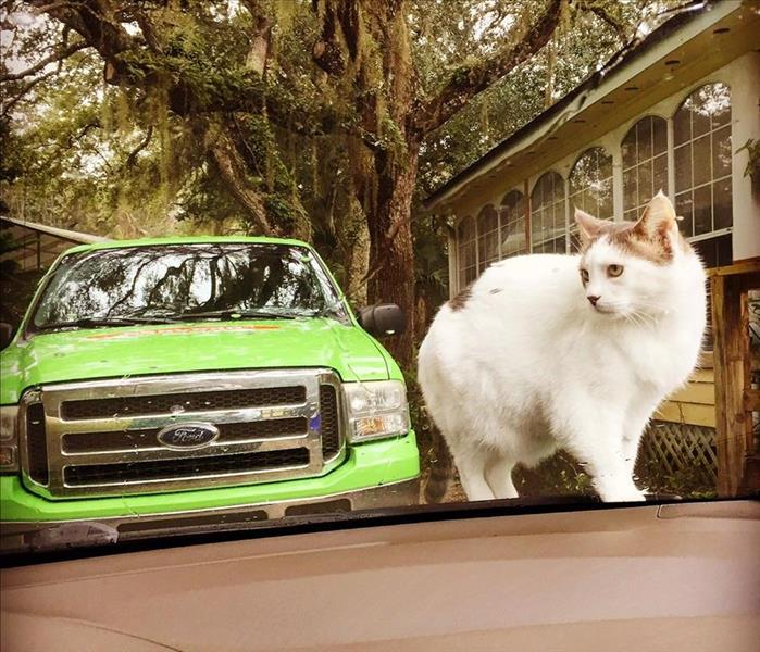 Community Cat knows what's good for her - SERVPRO in St. Augustine!