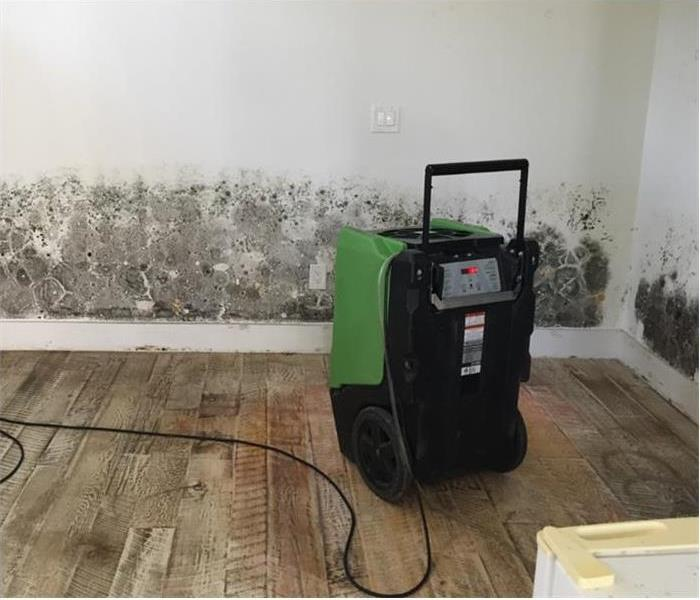 Mold Remediation Nation's Oldest City... Mold Damage St. Johns